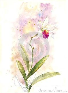 watercolor orchid 3