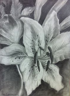 Lillies. Eraser & graphite. Dale Tyndall. June 2014