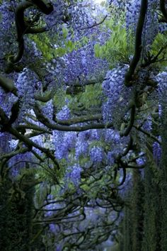 Wisteria forest, photo by Yann Monel. Beautiful World, Beautiful Gardens, Beautiful Flowers, Beautiful Places, Photo Deco, Tree Leaves, Parcs, Dream Garden, Garden Inspiration