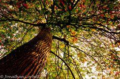 Westonbirt Arboretum, via Flickr.