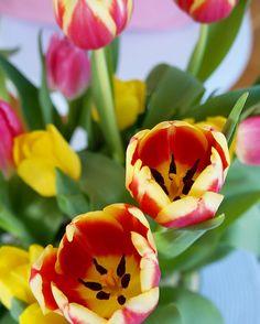 När de blommar så fint..  Så konstigt det känns att det redan är tisdag men ack så skönt!  Ser fram emot helgen då jag ska till Sthlm och bli lite ompysslad i håret.. Ha en fantastisk dag mina kära!  by interiorbyrim