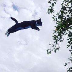 #ニャンコ飛行隊 新隊員のマリモ