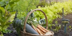 The Most Brilliant Cheat Sheet To Gardening We've Ever Seen