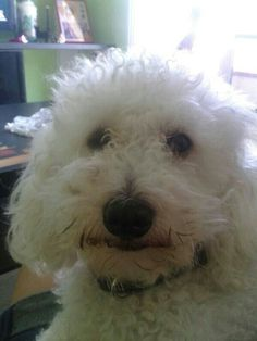 Home.Family Dogs, Animals, Animales, Animaux, Animal Memes, Animal, Pet Dogs, Dog, Animais