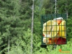 If you have ever thought about setting up a bird feeder for your home or classroom, do it! You and your children will learn so much and the birds will appreciate your efforts. We've had a blast setting up three easy & inexpensive feeders around our home.