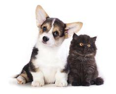 Primeros auxilios para mascotas: condiciones más comunes  