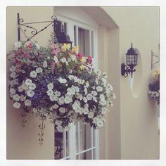 English hanging baskets