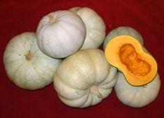 Runåbergs fröer - Kroshka, ekofrö. Den sötaste vintersquash vi hittat. Den ger en ljusgrå frukt på 2-3 kg. med ett tjockt, orange kött av bästa kvalitet. Sorten är rankande och ger 2-3 plattrunda frukter per planta. Kroshka är mycket pålitlig och ger mogen frukt även dåliga somrar. Väl mogen kan den lagras i ett år. 14 månader med bibehållen kvalitet är än så länge rekordet hos oss. Kroshka är en riktig antioxidantbomb med höga carotenhalter.
