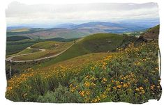 Long Tom pass provincial road in Mpumalanga province South Africa Tours, Greece Holiday, Nature Reserve, Homeland, Landscapes, Scenery, Mountain, African, Country