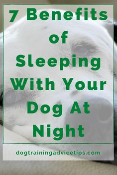 7 Benefits of Sleeping With Your Dog At Night. #dogtrainingadvicetips #dogcare #doghealth #dogtips #dogs Dog Facts, Dog Behavior, A Blessing, Dog Care, Crazy Cats, Dog Treats, Dog Training, Pugs, Your Dog