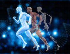 Glicose e gordura  são as principais fontes de energia do corpo.A glicose é a fonte de combustível mais facilmente acessível para...