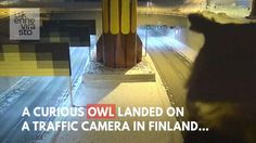 Meanwhile in Finland.