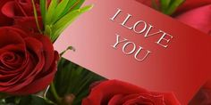 Love Wallpapers Free Download For Laptop