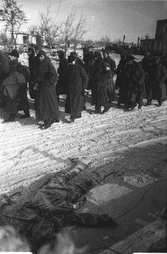German POWs, Stalingrad