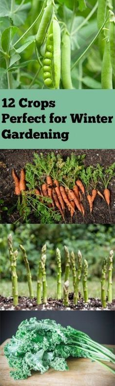 Winter garden, winter gardening, winter gardening hacks, popular pin, gardening, gardening 101, gardening tips and tricks, vegetable garden, grow your own veggies, veggies in the winter #wintervegetablegardening