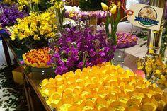 Decoração Magenta, Violeta e Amarelo. - Gabi Damas