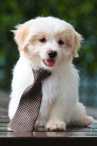 Puppy wearing tie