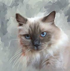 Custom Pet Portrait Ragdoll Cat - Cat Portrait - Cat Painting -...