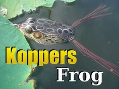KOPPERS Live Target Frog - Topwater Fishing Tips (Hat Cam Bass)
