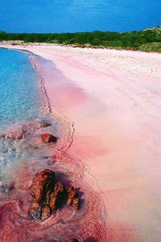 """Budelli (Arcipelago della Maddalena), """"The pink beach"""", """"La spiaggia rosa"""" Sardegna, Italy--- Deve il suo nome al caratteristico colore rosa corallino della sabbia della battigia, causato dalla presenza di gusci calcarei di Miniacina miniacea, un foraminifero il cui habitat viene individuato presso i rizomi di Posidonia oceanica, la fanerogama marina più importante del mar Mediterraneo."""