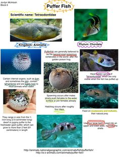 Jordyn McIntosh: Pufferfish