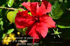 Rojo sinónimo de amor, también de sangre.. http://plantasmedicinalesatusalud.blogspot.com.ar/