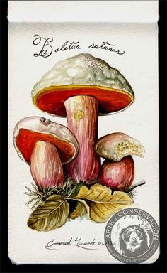 Sketching in Nature: Mushroom