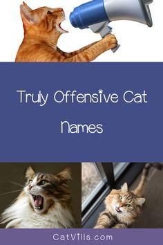 If you want to avoid being mundane, generic or even downright offensive, skip these top 10 most inappropriate cat names! Check them out! Great Names, Cool Names, Names For Black Cats, Old Fashioned Names, Female Names, Lots Of Cats, Outdoor Cats, Siamese Cats, More Fun