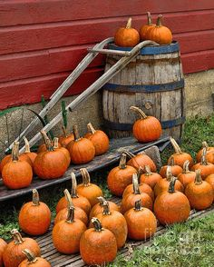 Pumpkins, wood barrel and antiques.