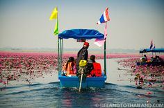 Putting Along Through the Parted Red Lotus Flowers in Thailand