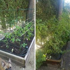 It is truly amazing to see how much life our urban farmers create in the gardens…