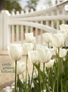 White tulips in the garden. Beautiful World, Beautiful Gardens, Beautiful Flowers, White Tulips, White Flowers, Dame Nature, Atlanta, Moon Garden, Spring Bulbs
