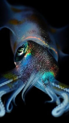 Animals-Squid- BLUE ANIMALS : More at FOSTERGINGER @ Pinterest