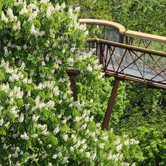Kew Tree Top Walkway by Marks Barfield Architects - Miniature Garden Ideas Tree Tent, Tree Canopy, Canopy Tent, Timber Handrail, Wood Bridge, Sky Bridge, National Botanical Gardens, Parking Design, Tree Forest
