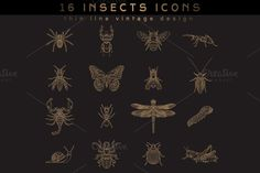 16 Insect Icons by karnoff on Creative Market