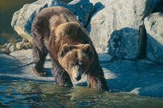 Daniel Smith, one of America's foremost wildlife artists, enjoys wide acclaim for his depictions of the natural world. Description from pinterest.com. I searched for this on bing.com/images