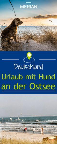 Von Grömitz über Rügen bis nach Damp: Im hohen Norden gibt es viele hundefreundliche Orte und Unterkünfte. Wir verraten, wo ihr am besten euren Urlaub mit Hund an der Ostsee verbringen könnt.