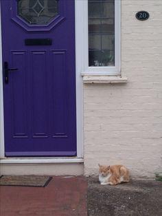 Kitty cat in Cliftonville, Margate, Kent.