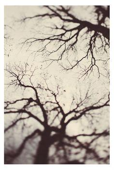 Alicia Bock Photography: Autumnal