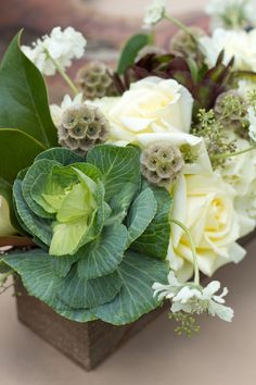 cabbages & roses to welcome spring
