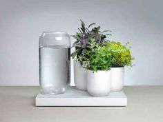 The self-watering plant tray Tableau