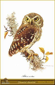 Owl art by Carl Brenders 894345