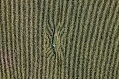 """Bird's Eye View Photography.  Gap in corn field. Klaus Leidorf takes aerial photos, mostly in Bavaria, South Germany. He pilots a Cessna 172, taking photos while he steers with his feet. """"For me, the challenge is to capture the combination of the beauty of nature, the graphic aspect and the emotion."""""""