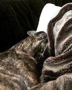 Nap time  #dog #dogs #puppy #pup #cute #instagood #dogs_of_instagram #pet #pets #petsagram #handsomedog #photooftheday #dogsofinstagram #ilovemydog #instagramdogs #nature #dogstagram #dogoftheday #lovedogs #lovepuppies #hound #adorable #doglover #