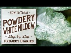 ★ How to: Treat Powdery White Mildew (A Complete Step by Step Guide) In Today's Project Diary Video I will show you a quick and easy way to make a homemade e. Vegetable Planting Guide, Home Vegetable Garden, Planting Vegetables, Planting Succulents, Growing Vegetables, Growing Plants, Powdery Mildew Treatment, Garden Bugs, Garden Projects