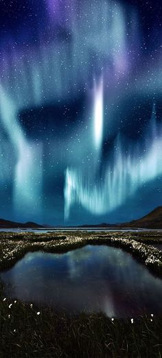 The Northern Light over the marsh landscape with wildflowers in Landmannalaugar, Iceland