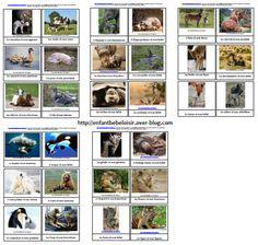Cartes nomenclature à imprimer - les animaux et leurs bébés