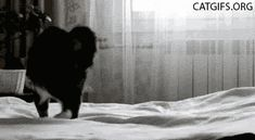 Crazy cat is catching something - funny cat gif - CATGIFS.ORG