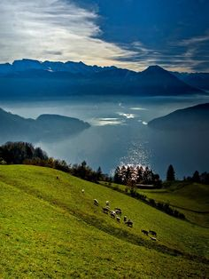 View from Rigi over the lake Lucerne, Switzerland / by Ercan Akkaya, via 500px