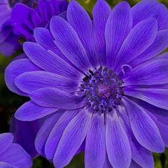 Purple Curl by Rob Hopkins